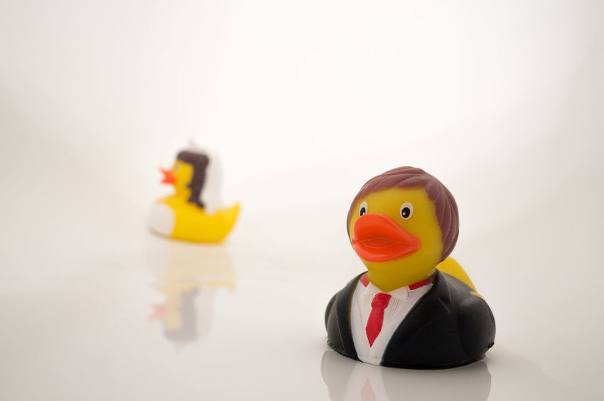 """Quak quak quak"" Couple Divorce Marriage Equality Argument Close-up Conflict Contention Copy Space Creativity Dispute Ducks Figurine  Hassle Human Representation Male Likeness Marital Quarrel Marriage  Married Couple Quarrel Representation Rubber Duck Still Life Studio Shot Toy White Background"