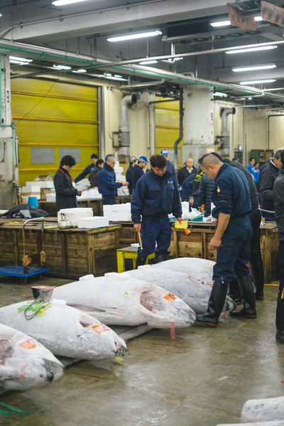 Day Factory Indoors  Industry Manual Worker Men Occupation People Protective Workwear Real People Standing Teamwork Tsukiji Fish Market Tsukijifishmarket Tuna Tuna Auction Tuna Fish Tunaauction Working