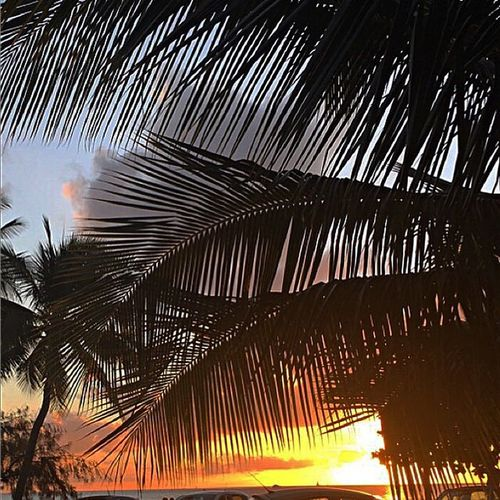Palm Sunset Beach Baie Des Citrons Noumea New Caledonia Newcal Pacific Island Life