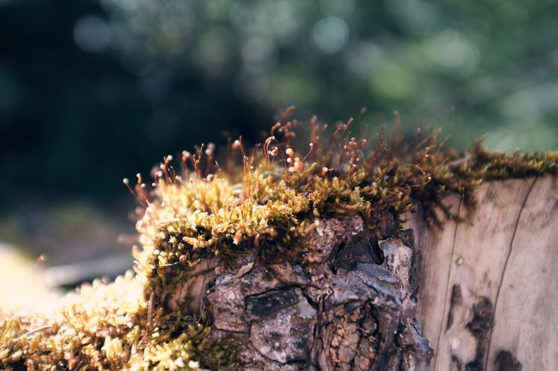 Close-up of moss growing on wood