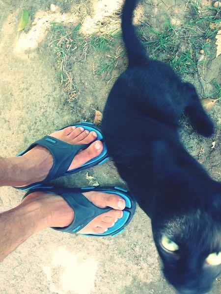 Greek Cats On Eyeem