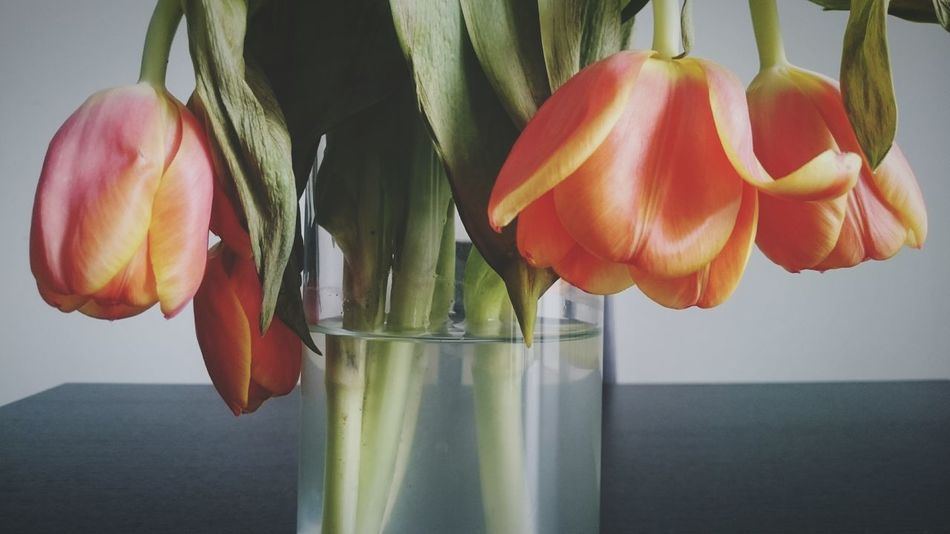 Beauty In Nature Showcase April Tulips Floral Flowers Arrangement Spring Flowers Blooming In Bloom Soft Flowers, Nature And Beauty Bouquet Of Flowers Flower Bouquet Arrangement Flower Orange Wilted Flower Wilted Wilted Tulips Telling Stories Differently Colour Of Life Eyeemphoto