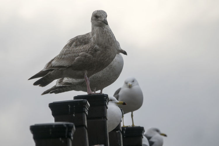 Birds perching against sky