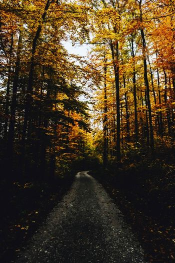 Hike trough the autumn colors ! Land Nature Travel Tree Plant Beauty In Nature Nature Tranquility The Way Forward No People Growth Forest Scenics - Nature Direction Land Non-urban Scene Outdoors Tranquil Scene Sunlight Idyllic Autumn Road Diminishing Perspective