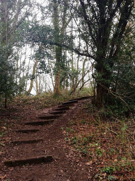 Steps Wintry Trees Knaresborough Beautiful Nature Wintery Trees