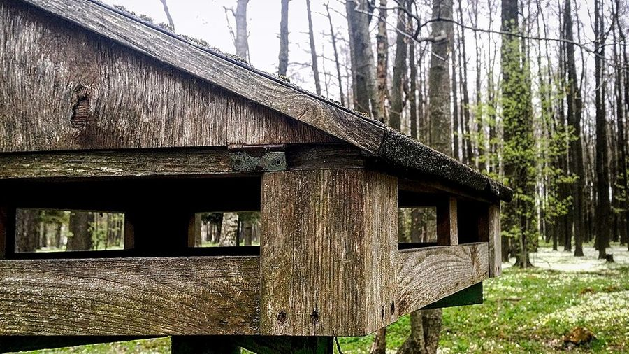 Built Structure Architecture Day Outdoors Tree No People Nature Sky Freedom Tallinn Estonia Lifestyles Beauty In Nature Grass Plant Birdhouse House For Birds Outside Photography