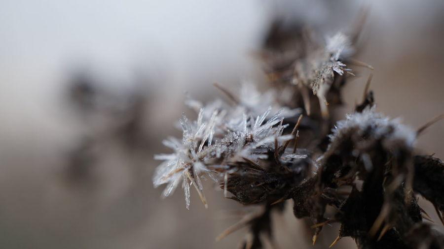 Frost on dead