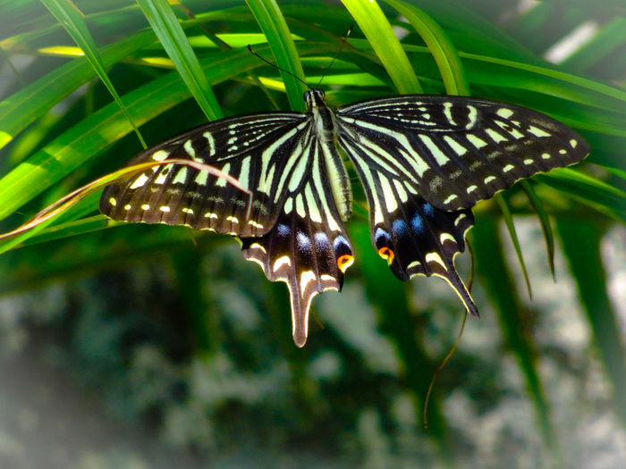 There is nothing in a caterpillar🐛 that tells you it's going to be a butterfly.🦋 Butterfly - Insect Insect Leaf Animal Themes Close-up Butterfly Antenna