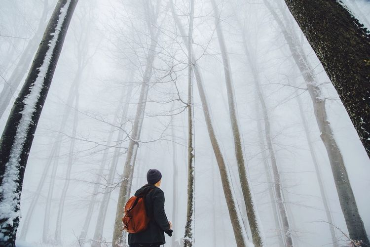 Low angle view of man standing amidst trees at forest during winter