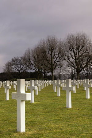 American war cemetery near Margraten in the Dutch province Limburg Cemetery Conformity Cross Day Grass Grave Large Group Of Objects Loss Memorial Military Nature No People Outdoors Tombstone Tree Unity War