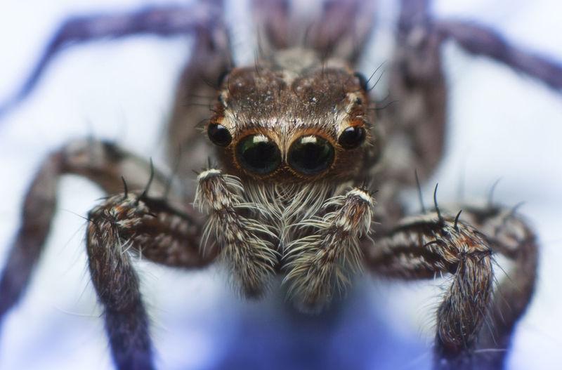 Close-Up Of Spider On Purple Flower