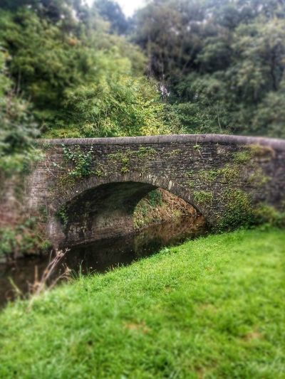 Swansea canal old bridge Green Color Grass Nature Growth Field Outdoors No People Day Beauty In Nature Water Tree Close-up Freshness