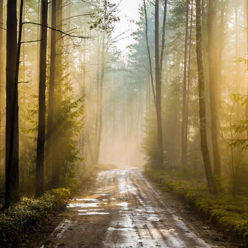 Split Beauty In Nature Direction Dirt Dirt Road Fog Footpath Forest Land Nature No People Outdoors Plant Road Sunlight The Way Forward Tranquil Scene Tranquility Transportation Tree Treelined WoodLand