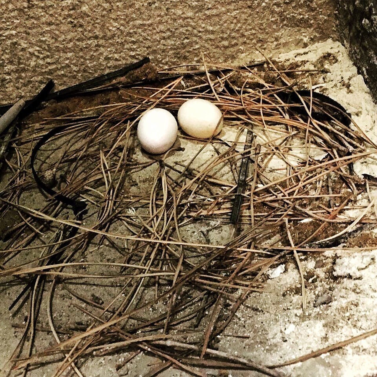 egg, animal nest, animal egg, bird nest, high angle view, no people, day, new life, fragility, close-up, outdoors, nature, food, bird, freshness
