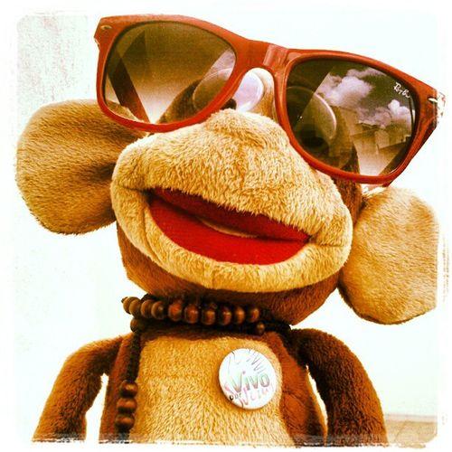 Monkey Sunglasses Collar Chapa juguetehahaha
