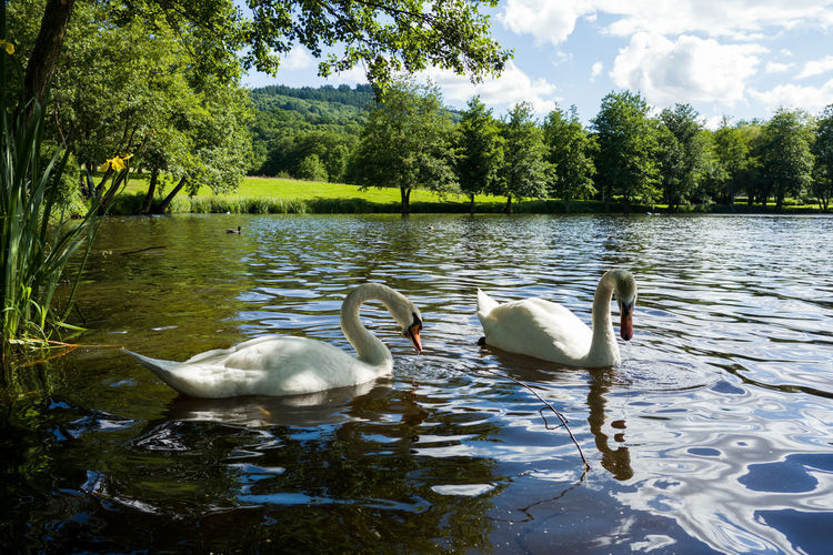 Animal Animal Family Autun Beauty In Nature Bird Day Green Color Growth Lake Lakeshore Nature No People Outdoors Plant Promenade Reflection Rippled Scenics Tranquil Scene Tranquility Tree Water Water Bird Wildlife