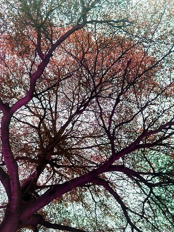 Tree Tree Photography Tree_collection  Tree Colors Colorful Tree Creative Color On Leaves Creative Color Nature Photography Nature Tree View Low Angle Shot Low Angle