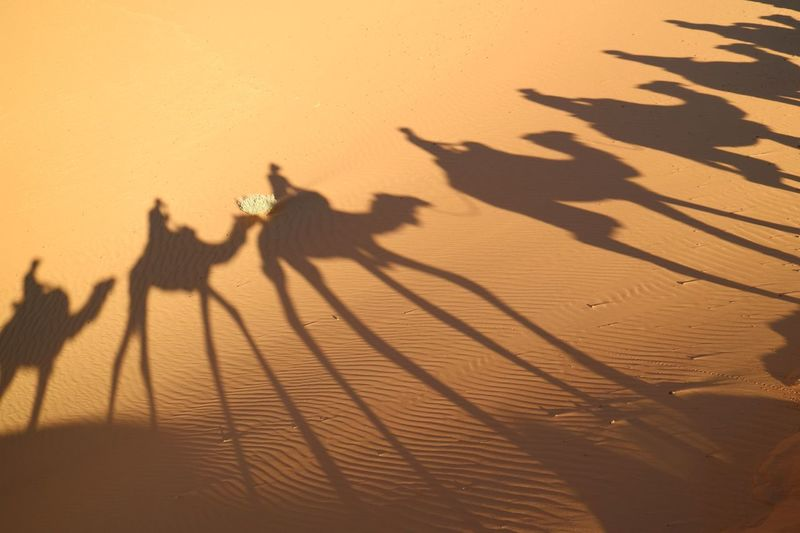 Shadow Of People On Camels At Desert