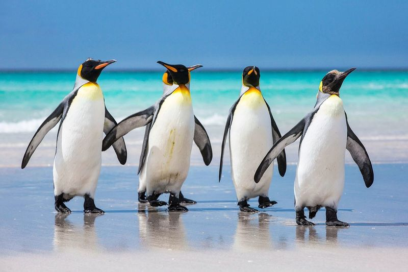 Penguins on shore at beach