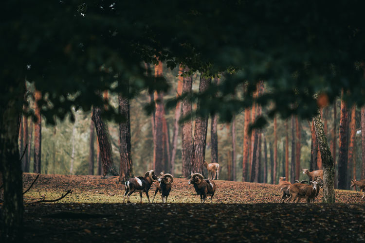 Animals on field in forest