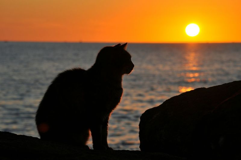 Silhouette cat on beach against sky during sunset