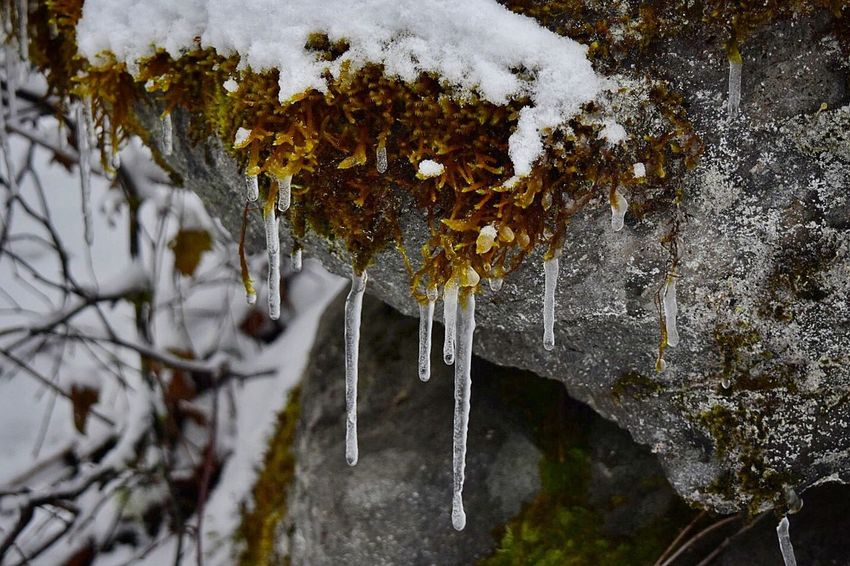 Cold Temperature Nature Winter Water Frozen Snow Weather Outdoors Beauty In Nature Close-up No People Day Icicles Snow Covered Moss Freezing Rocks Ice Winter Frozen Ice Icicle Tranquility Fragility Tree