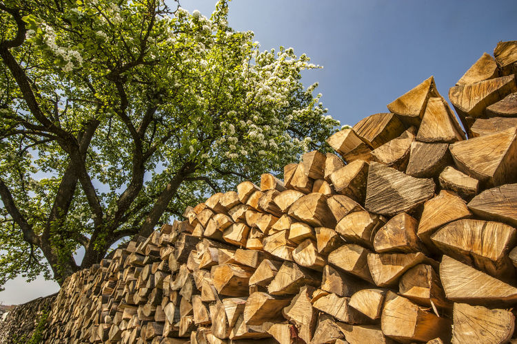 GERMANY, SWABIAN ALB. Neatly arranged long stack of firewood in an orchard with dandelions and a blooming apple tree Tree Plant Nature Timber Log Sunlight Wood Firewood Stack No People Outdoors Woodpile Chopped Sky Germany Swabian Alb Swabian Mountain Pattern Neatness Tidiness Orderly Orange Color Diagonal Apple Tree Blooming