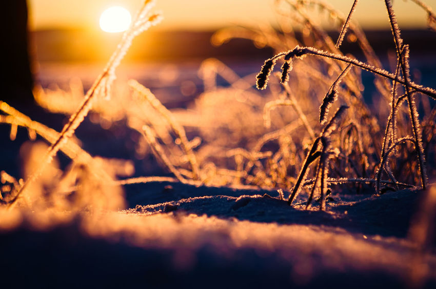 Frosty morning sunset... Frozen Nature Beauty In Nature Cold Temperature Fragility Sunset Sunlight Bokeh Photography Nature Close-up Winter Outdoors Morning Light Eye4photography  Backlit Ice Klaquax@home Frosty Morning Bokehlicious Ice Crystal Snow ❄