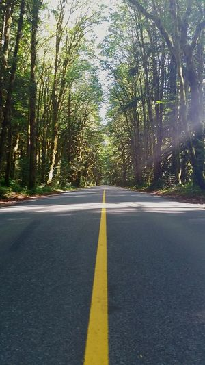 Roads Forest Nature No People Road The Way Forward Dividing Line Journey Sunlight Outdoors Path Forward