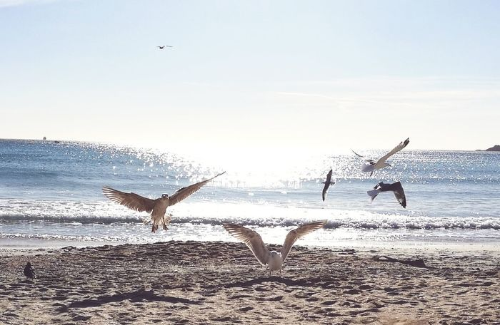 Seagulls Seagulls And Sea Beach Water Sea Flying Togetherness Nature People Bird Horizon Over Water Beauty In Nature Sand Outdoors Sky Day