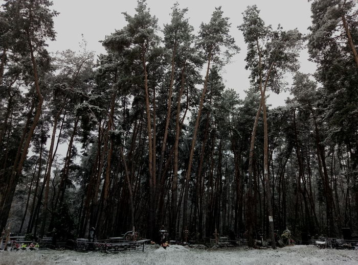 Ritual Howls - Cemetery Guards Tree Snow Forest Nature Winter Cold Temperature Pine Tree Pinaceae Beauty In Nature Outdoors WoodLand Tranquility Growth Tranquil Scene No People Scenics Day Low Angle View Tree Trunk Tree Area