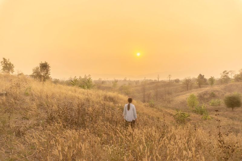 Walk past the grasslands at sunset. Plant One Person Field Land Sky Landscape Nature Sunset Sun Beauty In Nature Rural Scene Farm Growth Copy Space Outdoors Agriculture Environment Tranquility Rear View Scenics - Nature