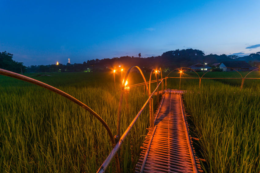 Bamboo Bridge in Paddy Field, Chiang Rai, Thailand. Bamboo Bridge Bamboo Bridge In Paddy Field, Chiang Rai, Thailand. Beauty In Nature Blue Garden Glowing Grass Grassy Green Color Illuminated Long Lush Foliage Narrow Nature Night No People Outdoors Paddy Field Railing Red Scenics Sky The Way Forward Tranquil Scene Tranquility