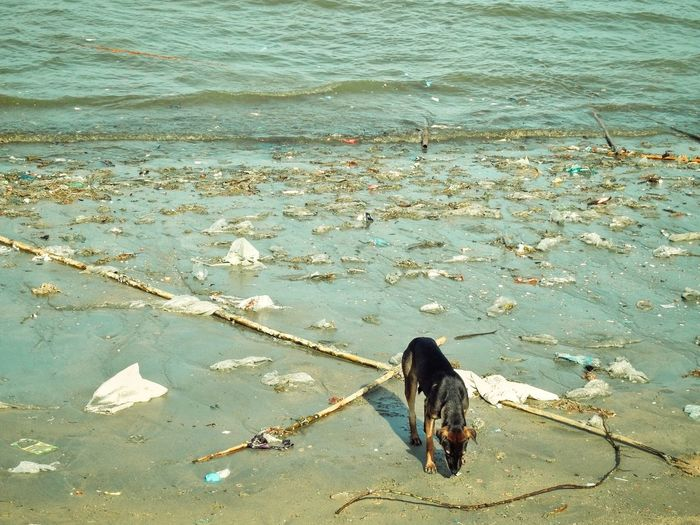 Beach filled with rubbish Sand Beach Environmental Problems Contaminated Landscape Field Wave Environment Sea Ocean Animal Dog Garbage Contamination Plastic Environment - LIMEX IMAGINE Water Water Pollution Sewage Pollution Environmental Damage Garbage Dump