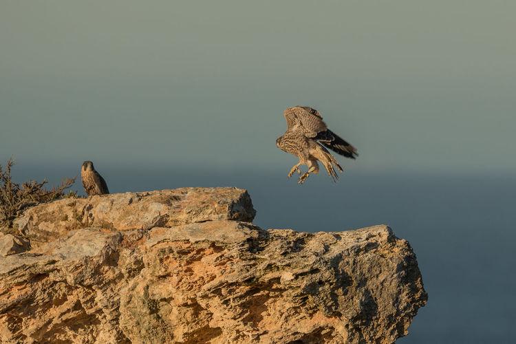 Bird flying by rock against sky