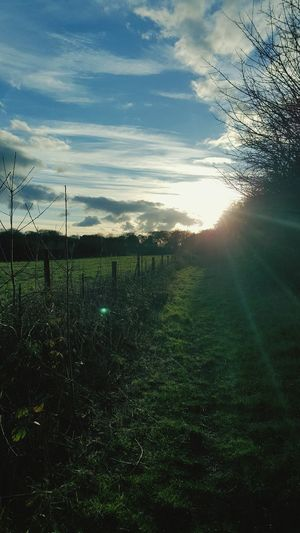 Local walks make good pictures👌 Grass Landscape Field Nature Rural Scene Sunbeam Tranquil Scene Tranquility Sunlight Sun Scenics Beauty In Nature Growth Farm Agriculture Lens Flare Solitude Grassy Sky First Eyeem Photo