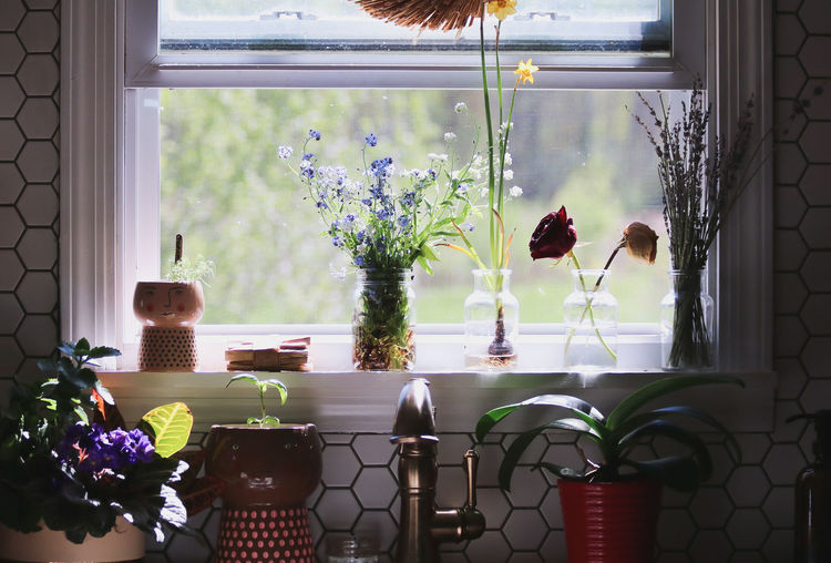 Potted plants on table by window at home