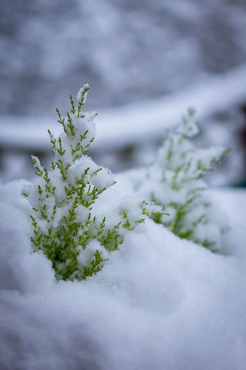 Cold Cold Winter ❄⛄ Small Tree Snow Snowy Trees
