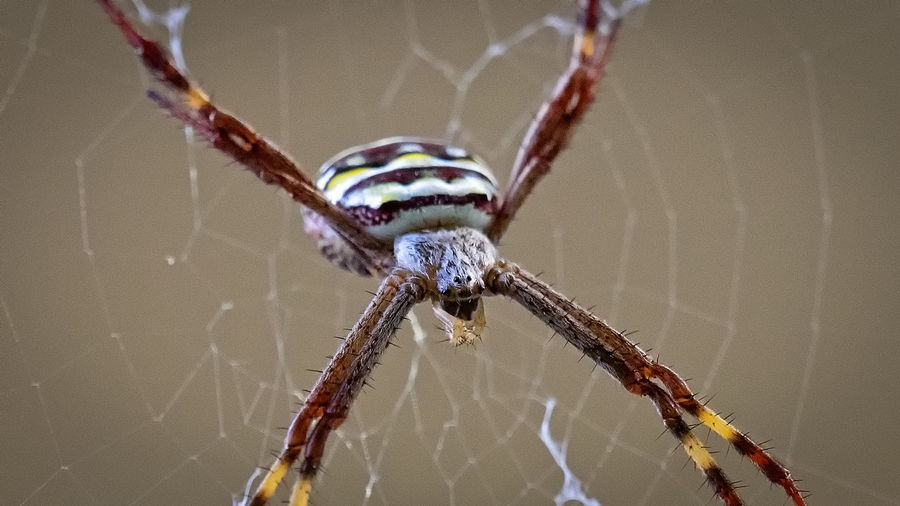 Close-up of spider on web