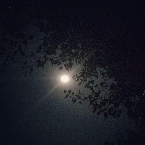 Moon Tranquility Glowing Night Sky Moonlight No People Leaf Tranquil Scene