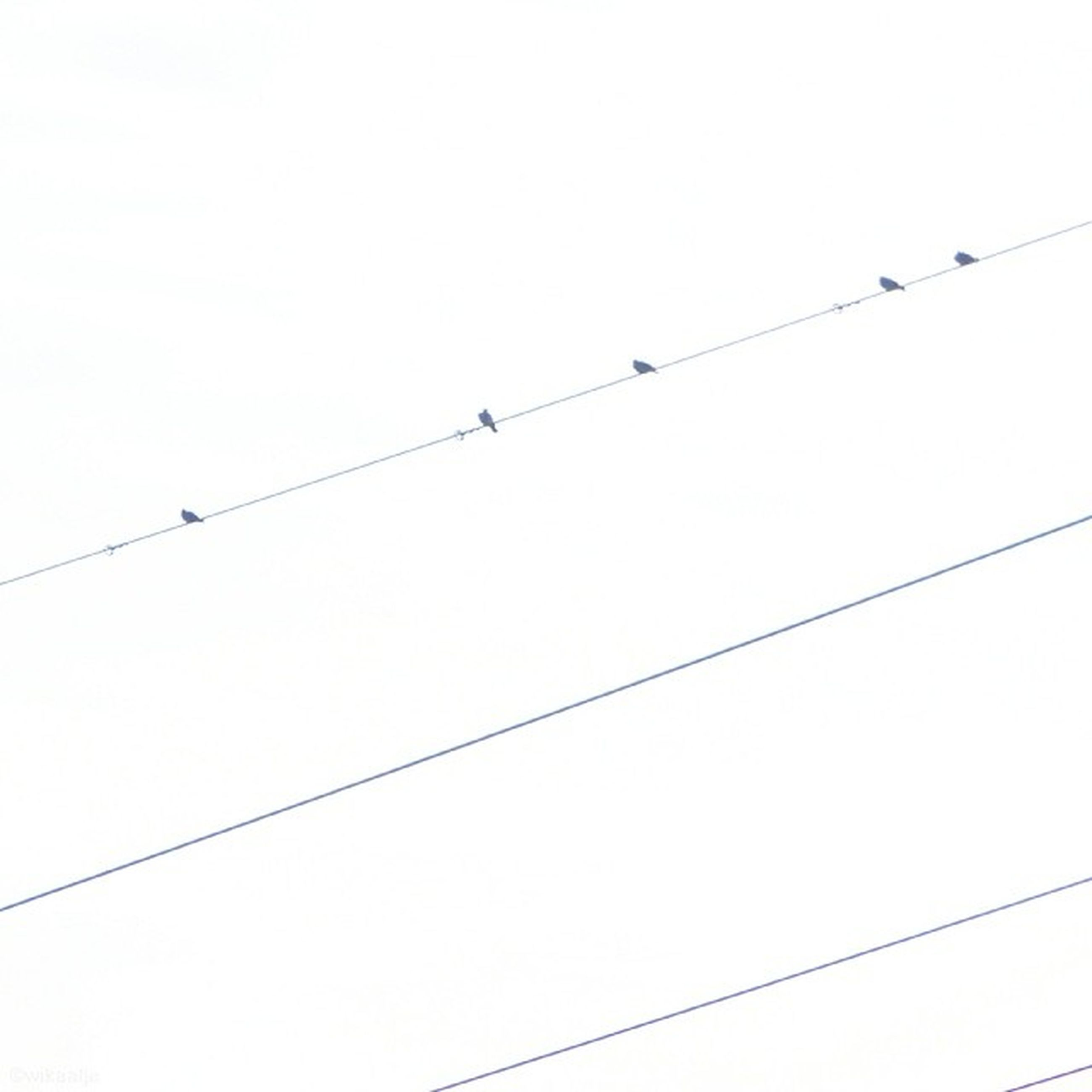 bird, animal themes, low angle view, animals in the wild, wildlife, clear sky, cable, power line, perching, copy space, connection, flying, electricity, silhouette, power supply, power cable, flock of birds, sky, outdoors
