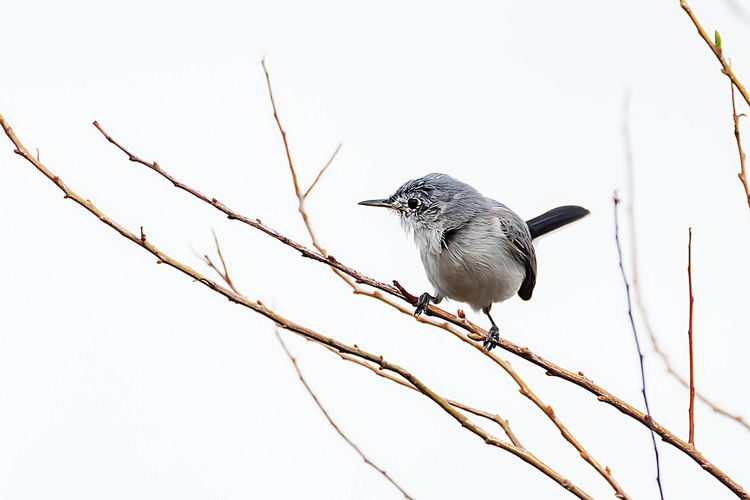 Animal Wildlife Vertebrate Bird Animal Animal Themes Animals In The Wild One Animal Perching Tree Plant Branch No People Low Angle View Day Nature Outdoors Clear Sky Close-up Sky Copy Space