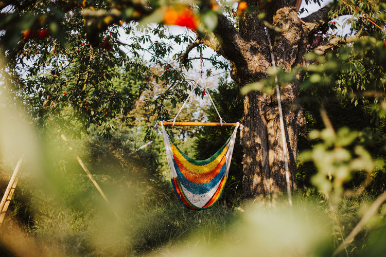 Colorful hammock on a tree in a garden on a hot summer day Relaxing Tranquility Beauty In Nature Branch Day Flag Growth Hammock Hammock Time Hammocking Hanging Land Leisure Activity Motion Multi Colored Nature No People Outdoors Plant Relaxation Selective Focus Summer Sunlight Tree Water
