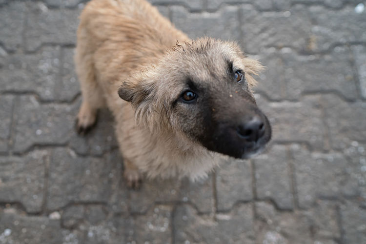 Wet Puppy Iznik