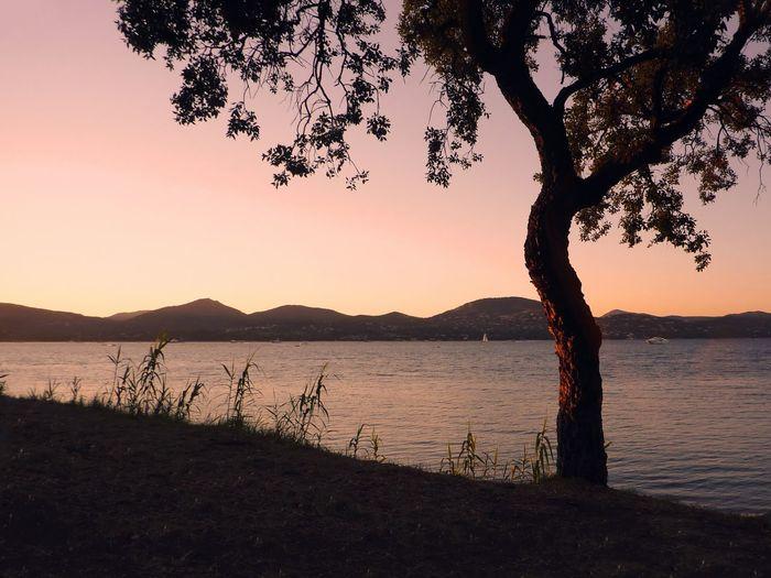 Saint Tropez Cotedazur France Vacances Landscape Mediterannee