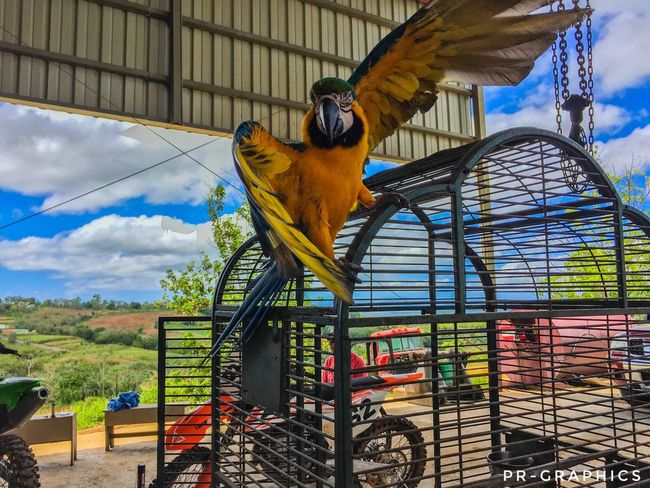 Bird Parrot Animal Themes One Animal Macaw Gold And Blue Macaw Day Sky No People Perching Multi Colored Nature Outdoors Animals In The Wild Architecture Beauty In Nature Mammal