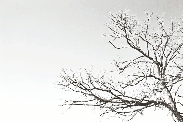 Bare Tree Branch Clear Sky Tree Tranquility Copy Space Tranquil Scene Scenics Low Angle View Beauty In Nature Nature Tree Trunk Majestic Day Dead Plant Solitude Dried Plant Sky Outdoors Growth