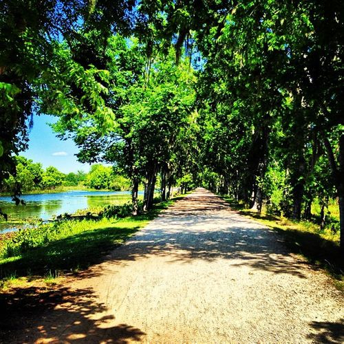 Welcome to the jungle... Walking Earlier Today Park trees trails tired hot day wednesday beautiful day gorgeous fun day amazing follow me