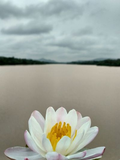 Ashram School Flower Sweet Food Water Lake No People Nature Dessert Outdoors Beach Sky Day Frozen Food Flower Head Freshness Food Lotus Water Lily Ice Cream Fragility Beauty In Nature Close-up First Eyeem Photo