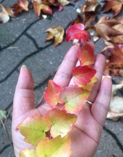Les feuilles se